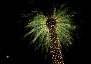 Christmas Lights Palm Trees